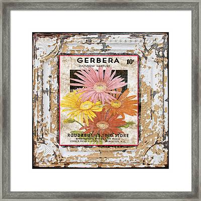 Gerbera On Vintage Tin Framed Print by Jean Plout