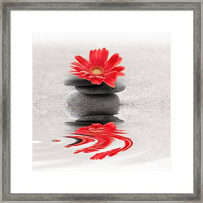 Gerbera Reflection Framed Print by Delphimages Photo Creations