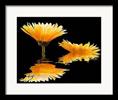Deer Resistant Flowers Framed Prints