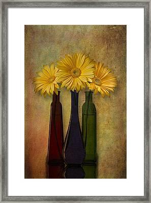 Gerbera Trio Framed Print by Susan Candelario