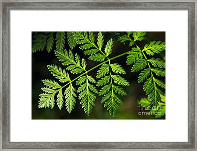 Gereric Vegetation Framed Print by Carlos Caetano