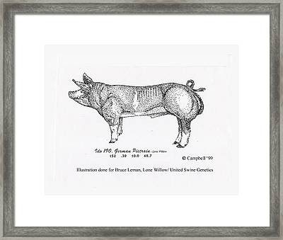 German Pietrain Boar Framed Print by Larry Campbell