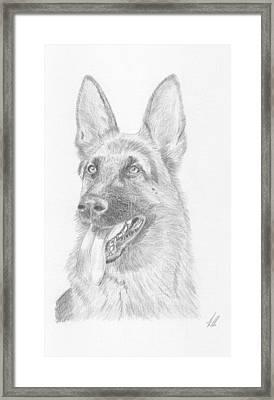 German Shepard Dog Framed Print by Keith Miller
