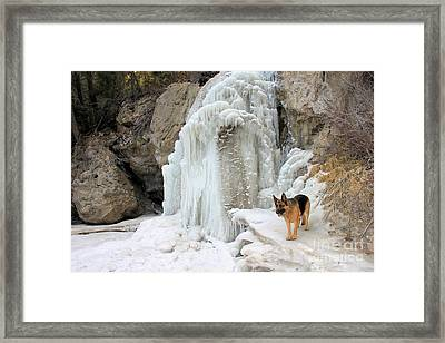 German Shepherd At Falls Framed Print