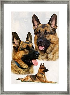 German Shepherd Collage Framed Print by Sandy Keeton