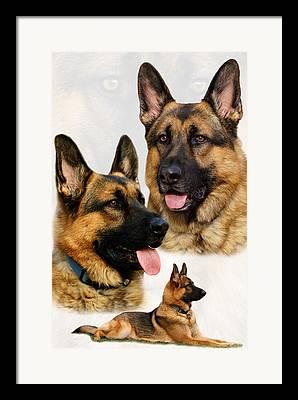 Indiana Dog Framed Prints