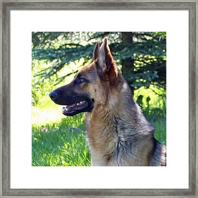 German Shepherd Dog Female Framed Print by Karon Melillo DeVega