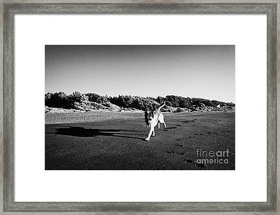 German Shepherd Dog With Tongue Hanging Out Walking Along Sandy Beach On The Pacific Ocean Los Pellines Chile Framed Print by Joe Fox