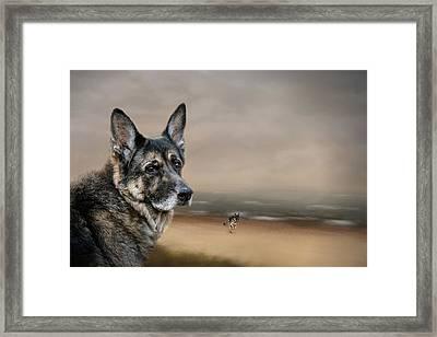 German Shepherd Dreaming Of The Beach Framed Print