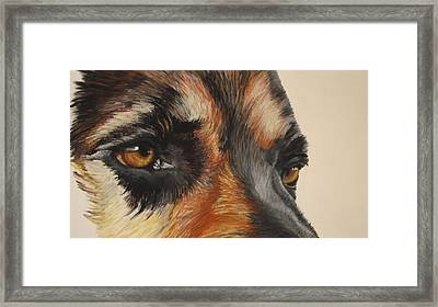 German Shepherd Gaze Framed Print by Ann Marie Chaffin