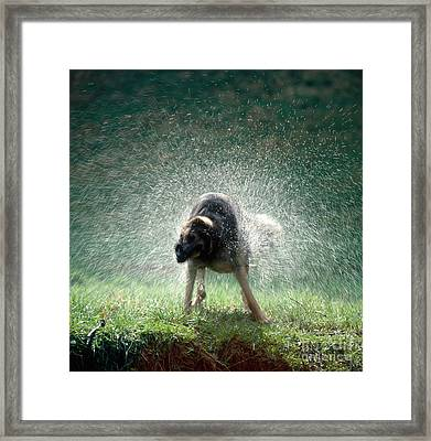 German Shepherd Framed Print by Hans Reinhard