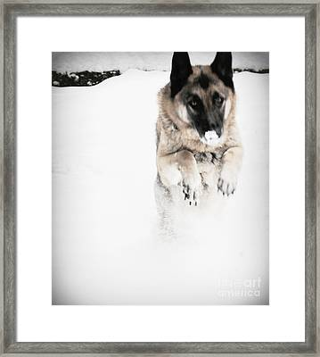 Framed Print featuring the photograph German Shepherd In The Snow by Tanya  Searcy