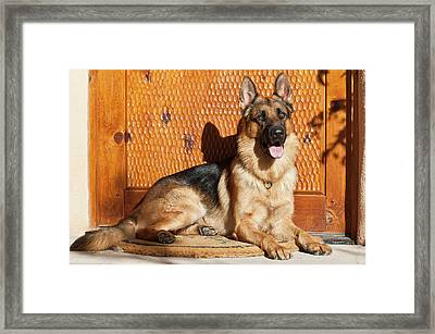 German Shepherd Lying On A Welcome Mat Framed Print