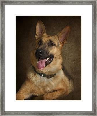 German Shepherd Portrait Framed Print by Eleanor Abramson