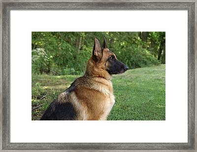 German Shepherd Profile Framed Print