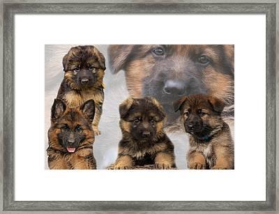 German Shepherd Puppy Collage Framed Print by Sandy Keeton