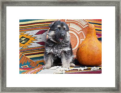 German Shepherd Puppy Sitting Framed Print by Zandria Muench Beraldo