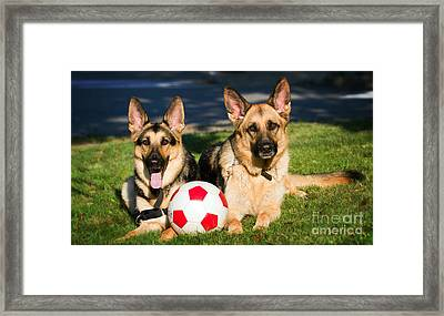 Framed Print featuring the photograph German Shepherd Sisters by Eleanor Abramson