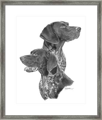 German Short-hair Pointer Framed Print