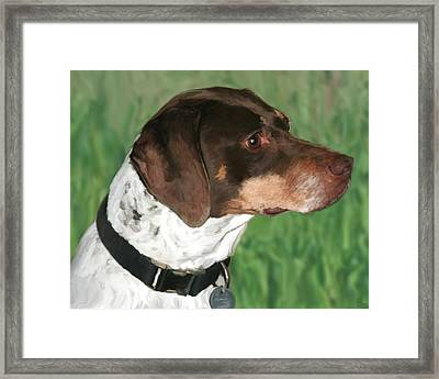 German Shorthaired Pointer Framed Print by Paul Tagliamonte