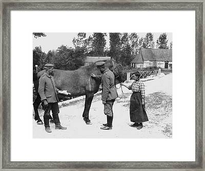 German Vet Treats French Horse Framed Print by Underwood Archives