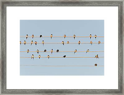 Germany, Unteruhldingen, Flock Of  Barn Framed Print by Westend61