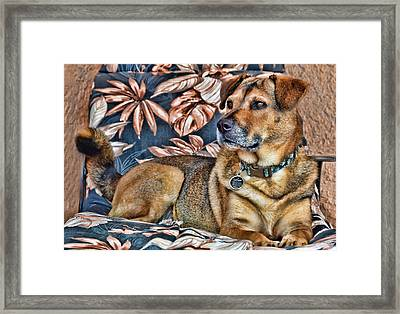 Framed Print featuring the photograph Gerry And The Lounge Chair by Barbara Manis