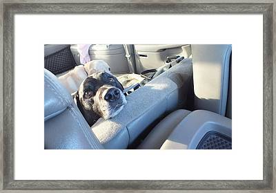 Get Outta My Seat Framed Print by Donna Brown