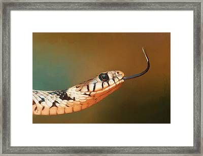 Get Over Here Framed Print by Ayse Deniz