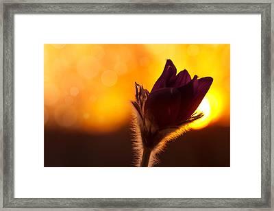 Get Sunset Framed Print by Steffen Gierok