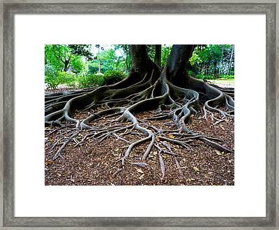 Get To The Root Of It Framed Print by Susan Duda