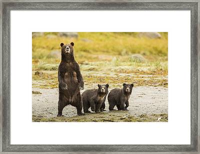 Getting A Better View Framed Print by Tim Grams