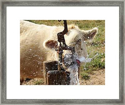 Getting A Drink Framed Print