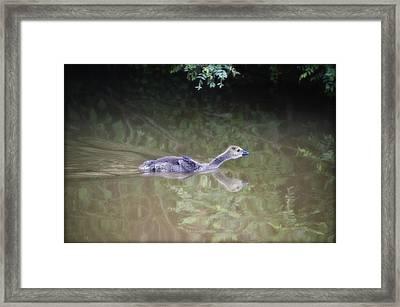 Getting Ahead Framed Print by Bill Cannon