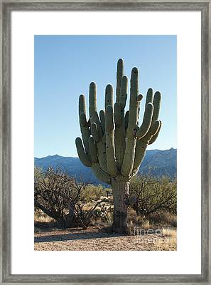 Getting Better With Age Framed Print
