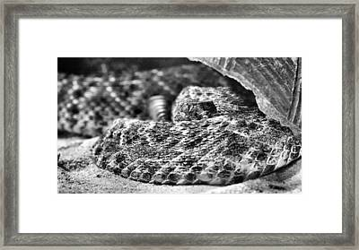 Getting Buzzed Bw Framed Print by JC Findley