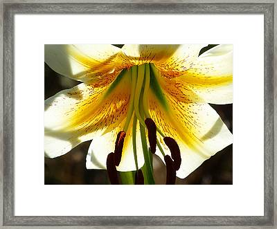 Getting Intimate Framed Print