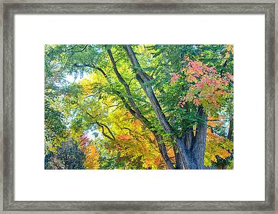 Getting Lost In The Colorful Autumn Trees Framed Print