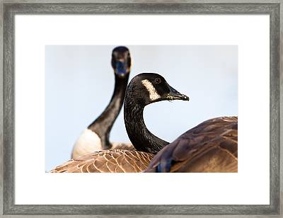 Getting My Groove On Framed Print by Annette Hugen
