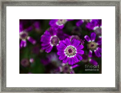 Getting Noticed Framed Print by Syed Aqueel
