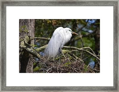 Framed Print featuring the photograph Getting Ready For Baby by Judith Morris