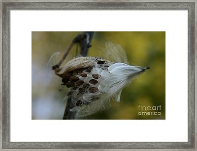 Getting Ready For Flight No.3 Framed Print by Neal Eslinger