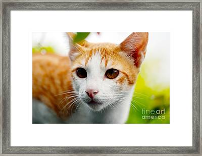 Getting Ready For The Hunt Framed Print by Ivy Ho