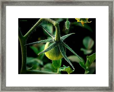 Getting Started Framed Print by Chris Berry