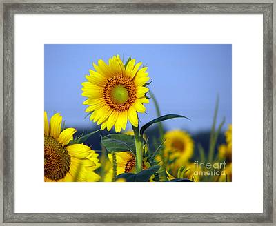 Getting To The Sun Framed Print by Amanda Barcon
