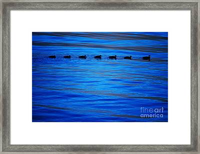 Getting Your Ducks In A Row Framed Print