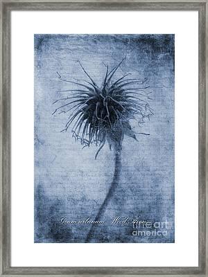 Geum Urbanum Cyanotype Framed Print by John Edwards