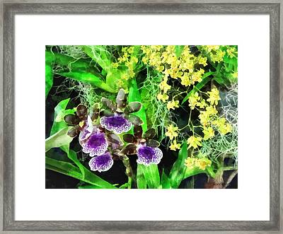 Geyser Jaimie And Golden Fantasy Orchids Framed Print by Susan Savad