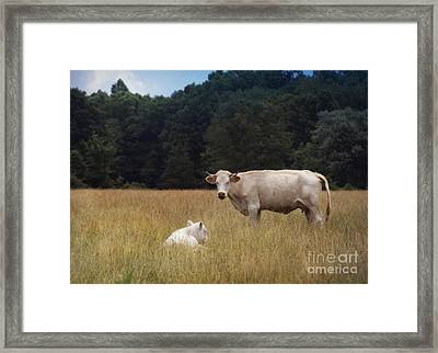 Ghost Cow And Calf Framed Print