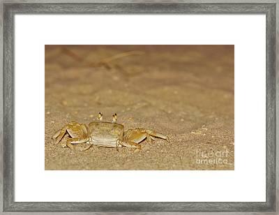 Ghost Crab 2 Framed Print